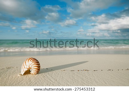 nautilus shell on white beach sand, against sea waves, shallow dof, soft focus - stock photo