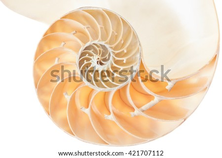 Nautilus shell section, perfect Fibonacci pattern isolated on white, clipping path included - stock photo