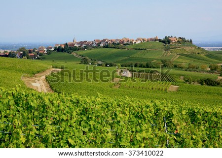 Near Bergheim, 09.29.2012. A view of a row of a vineyard of Alsace wine, and a view of the village of Bergheim - stock photo