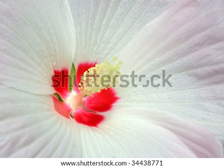 nearly picture the flower from a petal - stock photo
