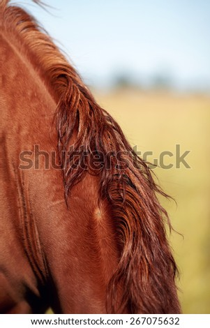 Neck of the horse who is grazed on a pasture. - stock photo