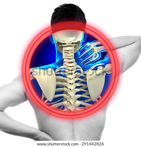 Neck Pain Cervical Spine isolated on white - REAL Anatomy concept - stock photo