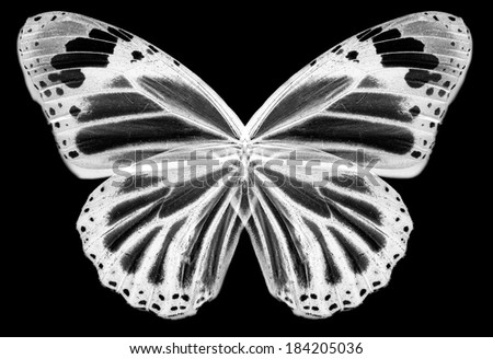 Negative butterfly isolated - stock photo