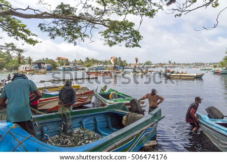 NEGOMBO SRI LANKA - CIRCA  SEPT 2016 - Unidentified fishermen sort and clean their catch on the banks of the Negombo lagoon after a morning out fishing.
