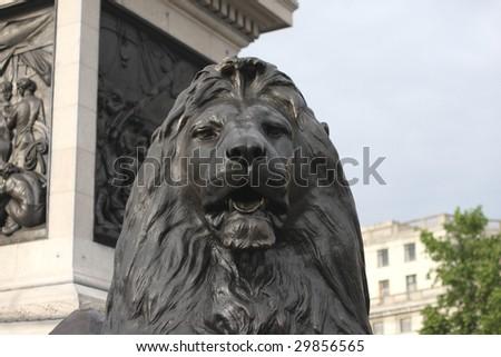 Nelson's Column's lion in London's Trafalgar square. - stock photo