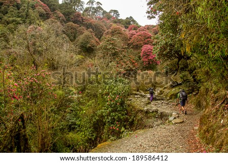NEPAL - APRIL 04 ,2013: Unidentified trekkers on the way to the peak of the mountain,nepal  was famous for it scenic trekking route. - stock photo