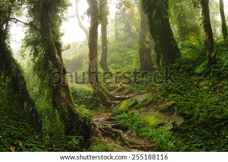 Nepal Jungle - stock photo