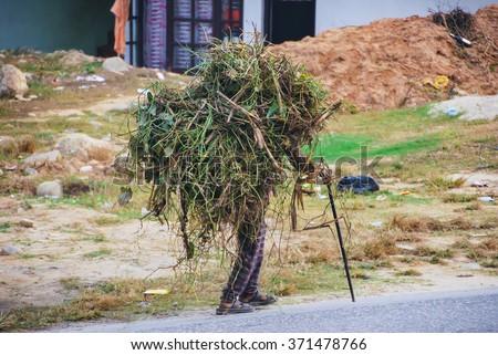 Nepalese old man loading underbrush  - stock photo