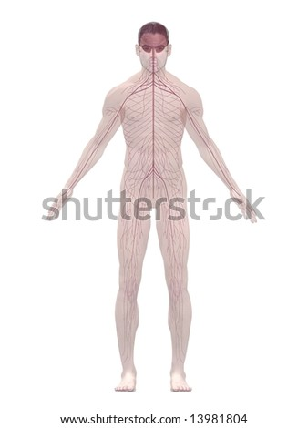 nerve system - stock photo