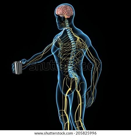 Nervous System - stock photo