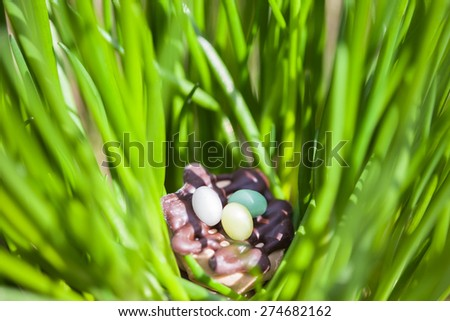 Nest in the grass, green abstract blurred background, makro, wallpaper pattern - stock photo