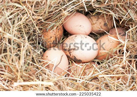 Nest of eggs from a number of free range hens of assorted breeds - stock photo