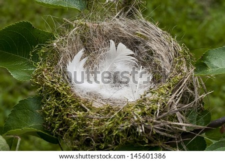 Nest on a tree - lined inside with feathers - stock photo