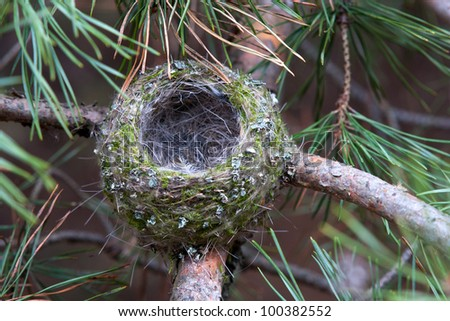 nest on tree - stock photo