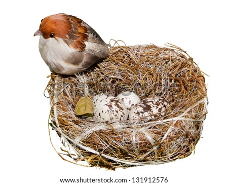 Nest's bird with egg on a white background - stock photo
