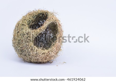 Nest sparrow on  white background.
