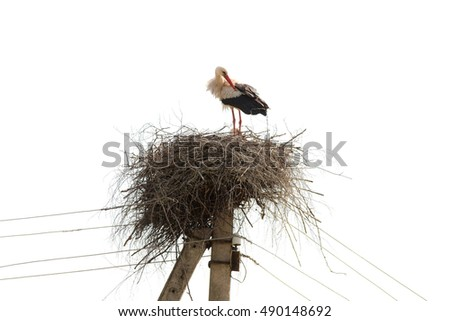 nest with a stork on electric pole, isolated
