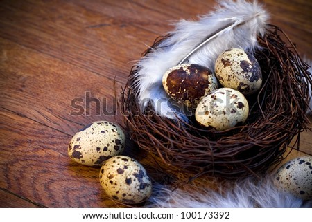 Nest with easter feather eggs decorated by feathers