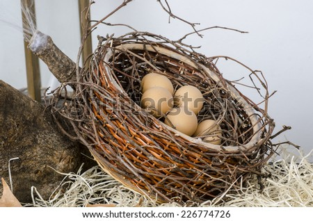 Nest with egg - stock photo