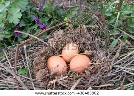 nest with eggs in a field