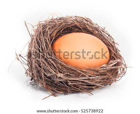nest with one egg isolated on white background