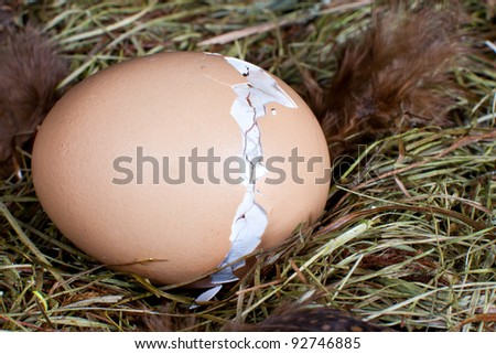 Nest with unborn chick trying to get out of his egg
