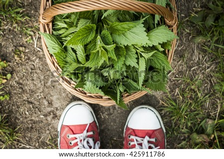 Nettle in the hamper and red shoes. Hipster. Harvest. Herbs. - stock photo