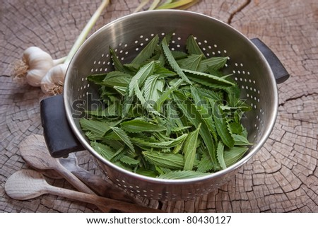 Nettles in a colander ready for rinsing and cooking. Urtica dioica. - stock photo
