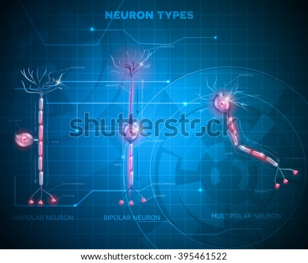 Neuron types, cells that is the main part of the nervous system. Abstract blue technology background - stock photo