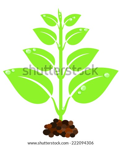 New born green plant with droplets - stock photo