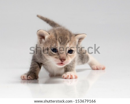New born kitty cat isolated over white background - stock photo