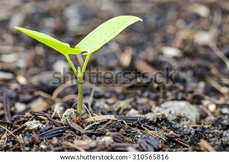New born plant from ground - stock photo