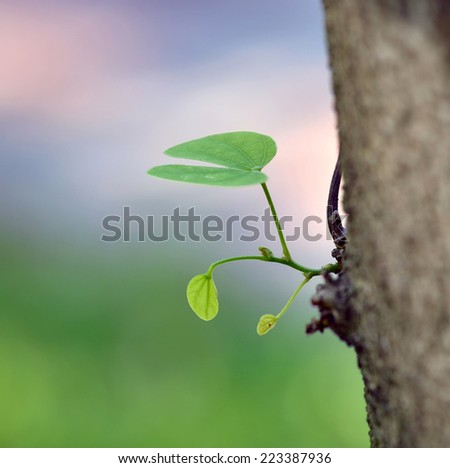 New Branch Growing on Tree - stock photo
