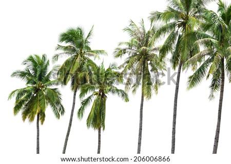 New coconut tree isolate on white - stock photo