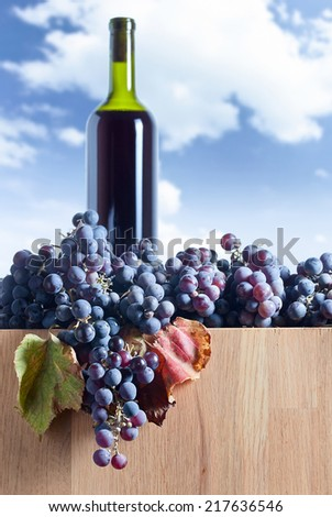 New crop of grapes for wine manufacture , focus on foreground - stock photo