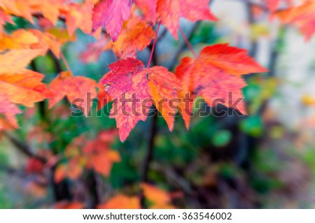 New England autumn foliage. - stock photo
