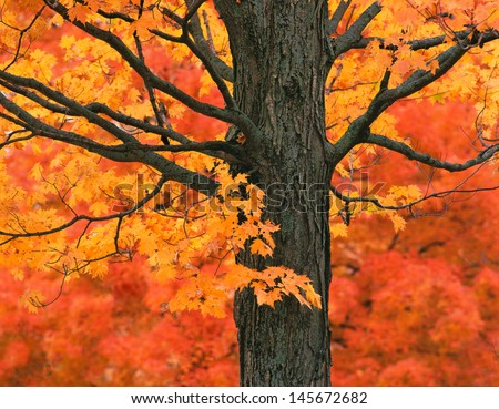 New England Autumn Trees - stock photo