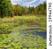 New England marsh & lily pond,		Long Pond,	Mount Desert Island, Acadia National park, Maine, New England - stock photo