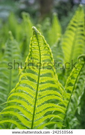 new fern - stock photo