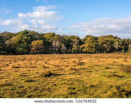 New forest in Dorest in UK in fall.