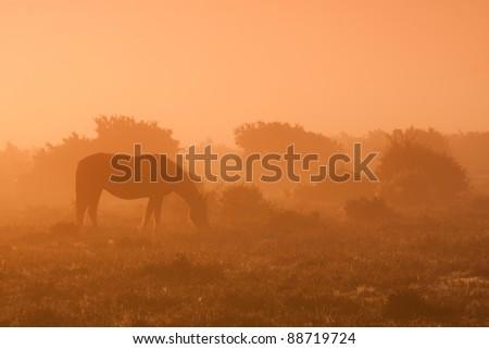 New forest pony - stock photo