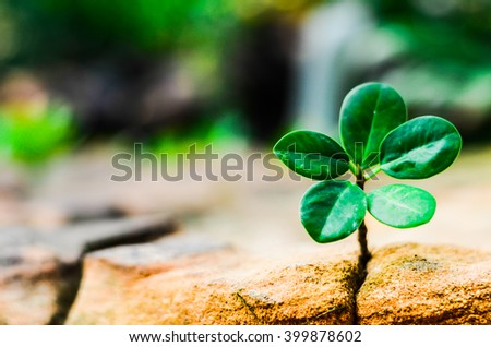 New green leaves born on stone, textured background , nature stock photo,select focus