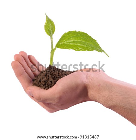 new green plant growing in hand