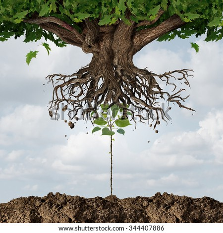 New leadership takeover or taking over concept or development and renewal business symbol  as an emerging young sapling pushing out an older more established tree as a success start up metaphor. - stock photo