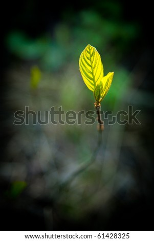 New leaf growing of ground - stock photo