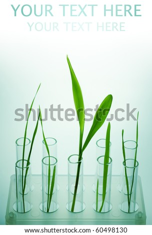 New life... - stock photo