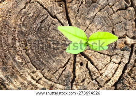 new life  business concept - stock photo