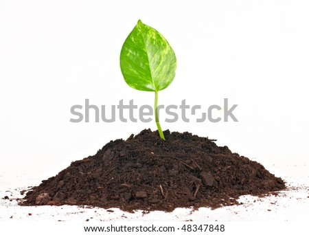 New life concept by small plant growth from soil.