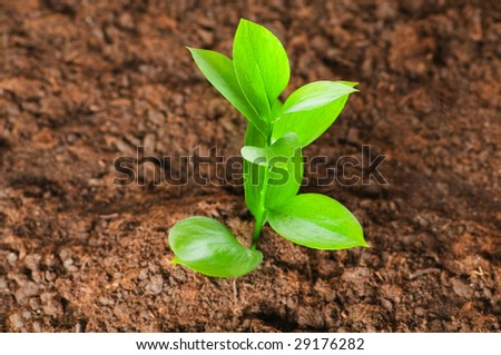 New life concept - green seedling growing out of soil