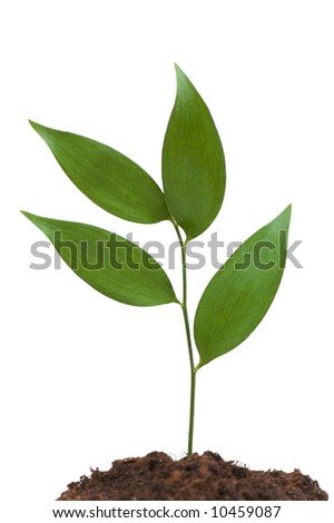 New Life concept with green branch on white - stock photo